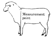 sheep-measurement-point