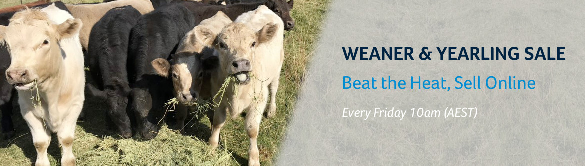 New Weaner & Yearling Sale